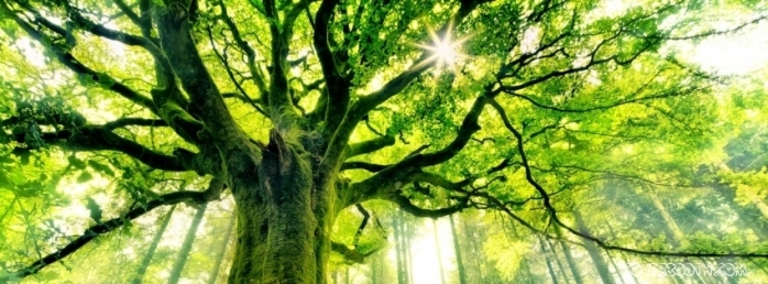 green-aged-tree-in-sunshine-facebook-cover