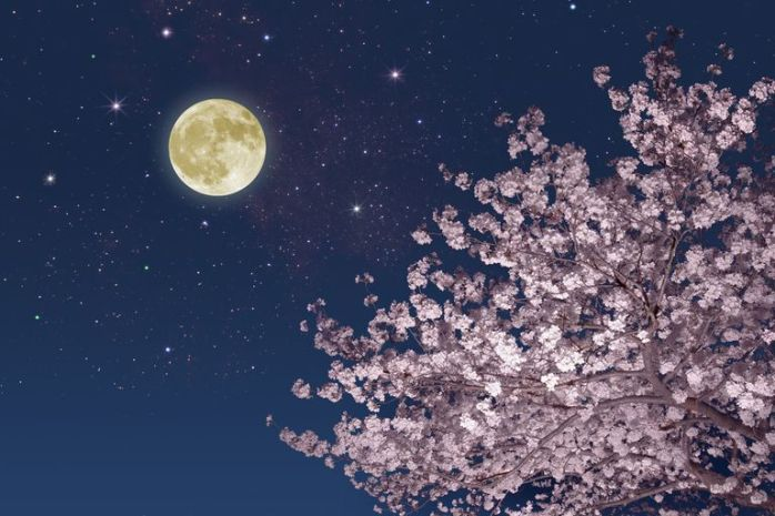 moon-stars-and-cherry-blossoms-183841767-5c603322c9e77c0001d31d45