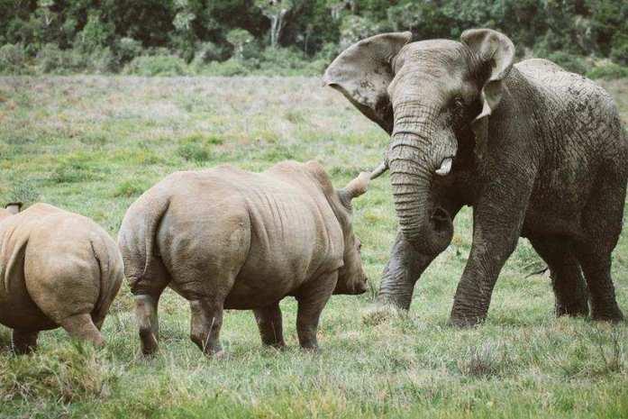 kariega-rhino-elephant-janniklaswedig_jpeg