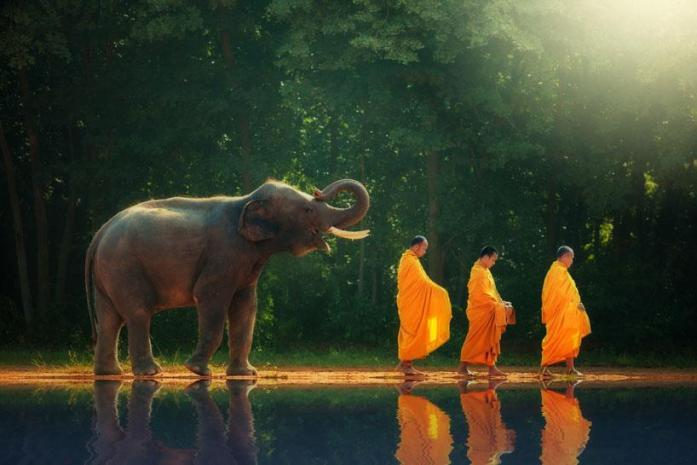 Elephant-Spiritual-Meaning-Elephant-Symbolism